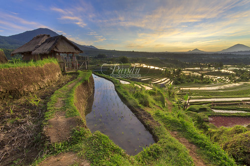 morning bali house field indonesia landscape photography tour village rice small calm hut guide peacefull jatiluwih baliphotography balitravelphotography baliphotographytour baliphotographyguide