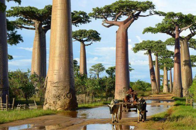 1_amazing-trees-17.jpg