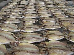 Fish-drying