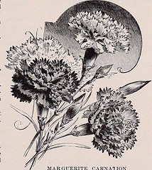 """Image from page 34 of """"Beckert's garden, flower and lawn seeds"""" (1908)"""