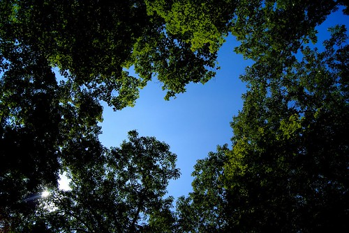 blue trees ohio summer sky nature hiking sony august nativeamerican alpha mound moundbuilders 2014 a230 tarlton fairfieldcounty crossmound fairfieldcountyhistoricalparks