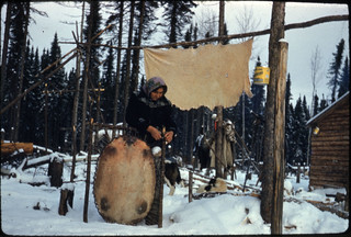 Mrs. George Baxter lacing a beaver pelt into a drying frame. Overhead hangs half of a tanned moosehide.