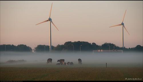 orange windmill sunrise cows windturbine oranje koeien molens zonsopkomst peterbijkerkeu