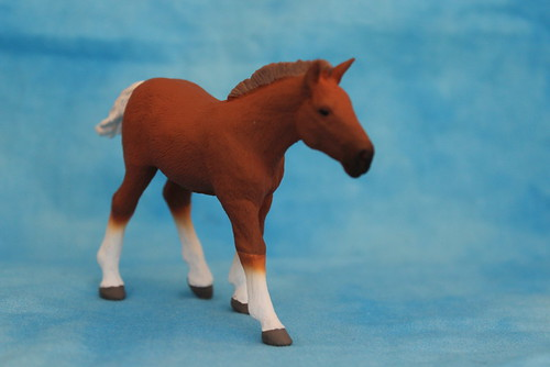 Walkaround of the 2014 Mojo Fun Suffolk Punch Foal 14878019697_af665164ac