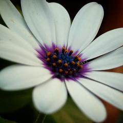 Microcosmos. El universo en una flor.  #igers #igersbsas #igersargentina #macro #flor #flower #MiJardin #unyka #unykaphoto #unykajardin