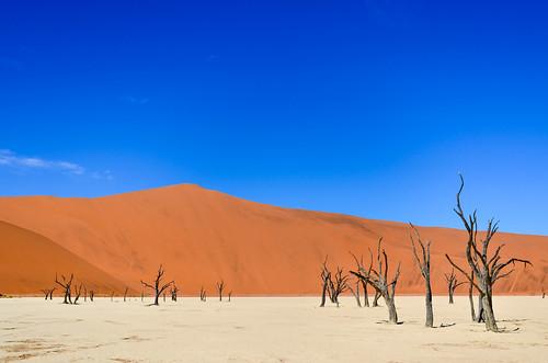 Couleurs vives du Chott, dunes de sable et des arbres morts dans Dead Vlei, Sossusvlei, Namibie