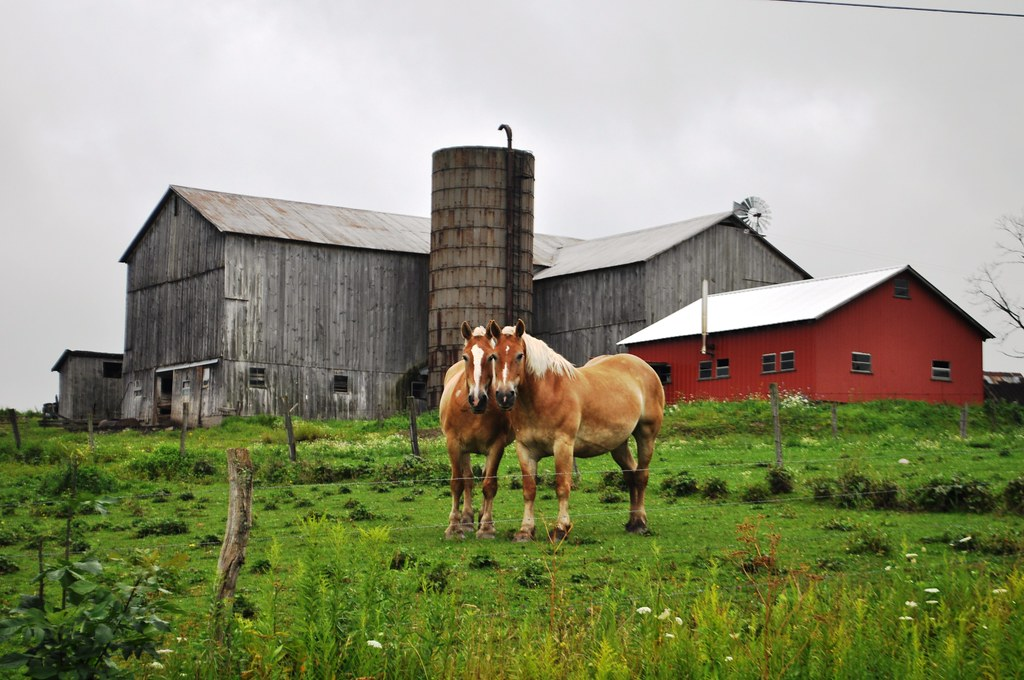 Horses Along New York's Amish Trail