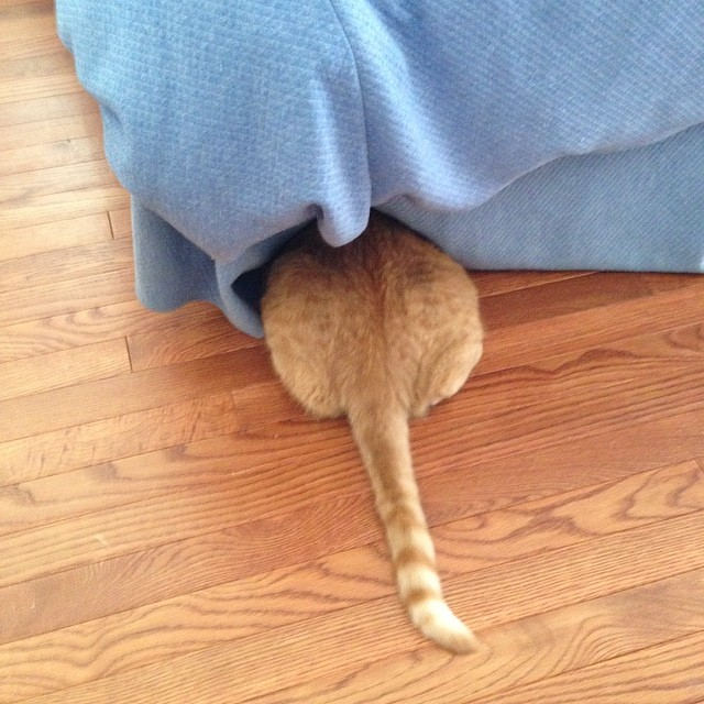 Hiding: You're Doing It Wrong #cat #catsofinstagram #foodcatspens