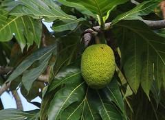Sri Lanka Flora