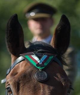 Warrior Dickin medal