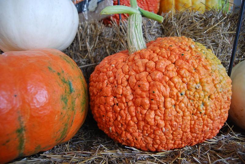 Southwood Grown Pumpkins