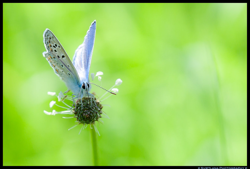 Butterfly on the green