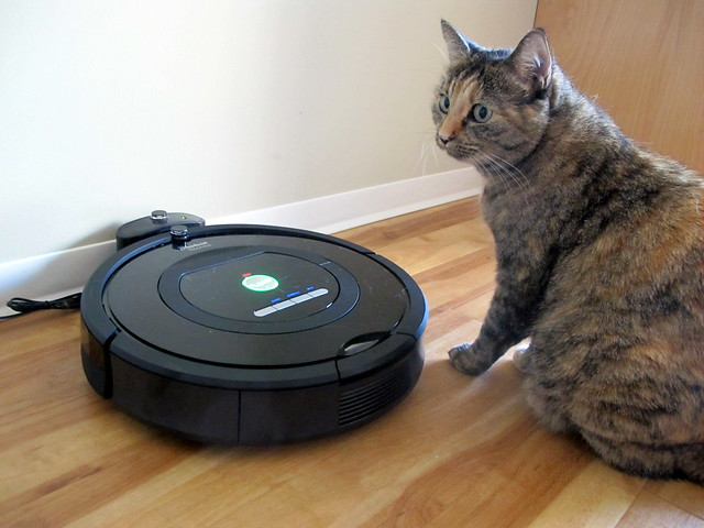 Roomba and Cat