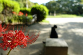 The red spider lily in commuting 2014/09 No.2.