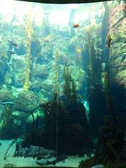 coral reef(1.0), algae(1.0), coral(1.0), seaweed(1.0), marine biology(1.0), underwater(1.0), reef(1.0), kelp(1.0), aquarium(1.0),