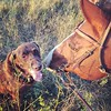Hanging with the boys...#ranchlife #autumn #lab #horses #northdakota