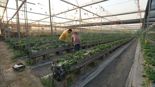 許多農民相信好的土壤和農法才能種出美味農作