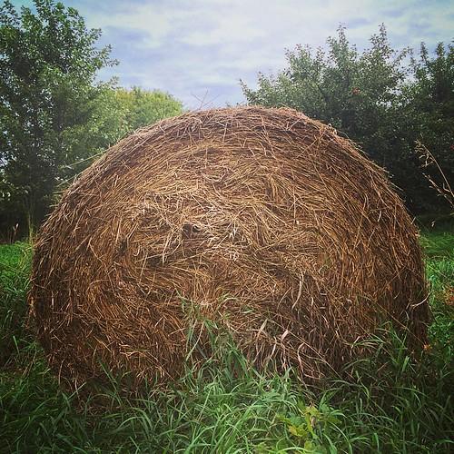 #farm #hay #bale #round #lynnfriedman