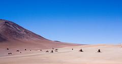 erg, sand, plain, aeolian landform, natural environment, desert, dune, landscape, wadi,