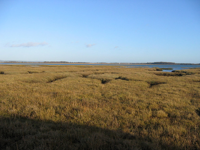 Marshes beside Thorney Island