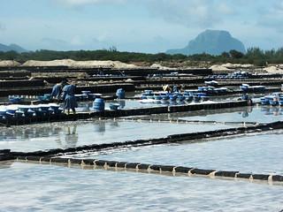 Salinen auf Mauritius