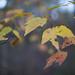 Autumn walk by Mr. Greenjeans