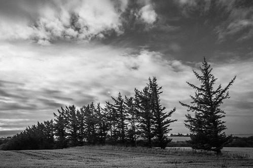 dänemark danmark himmel denmark clouds bäume nordjylland jütland trees jylland sw schwarzweis nordjütland sky limfjord bw blackandwhite wolken baumreihe bã¤ume dã¤nemark jã¼tland nordjã¼tland schwarzweiã