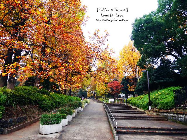 日本東京景點澀谷區代代木公園賞楓葉 (2)