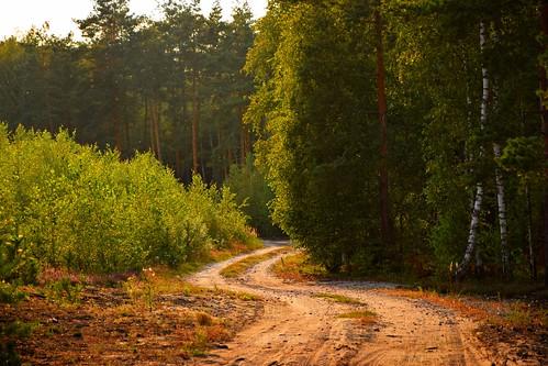 path road sand sandy summer forest woods nature green tree trees light sunlight łódzkie lodzkie polska poland uroczysko uroczyskoświęteługi