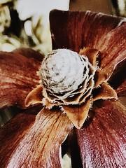 Indoor bloom