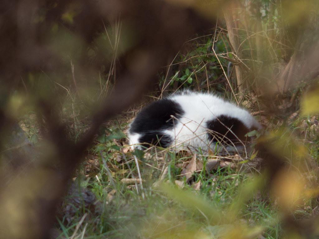 Stray cat(f/2.8)