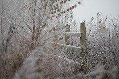 Frosty Morning Fence