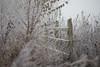 Frosty Morning Fence