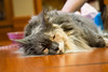 animal-therapy-1040110