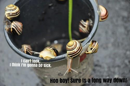 Bucket of garden snails II