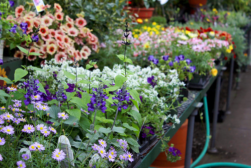 flower nursery, flowers, plants, plantlife, spring
