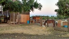 farm, village, ranch, shack, property, yard, stable, real estate, rural area,