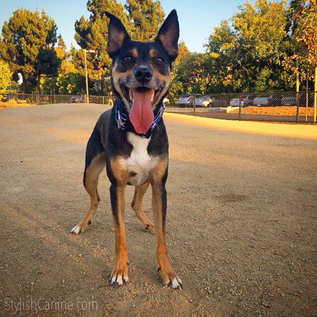 Dog in the Seven Seas Park dog run area