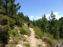 Sentier de la crête Vaccia - Cavalletti : au retour après Punta Mascaraccia