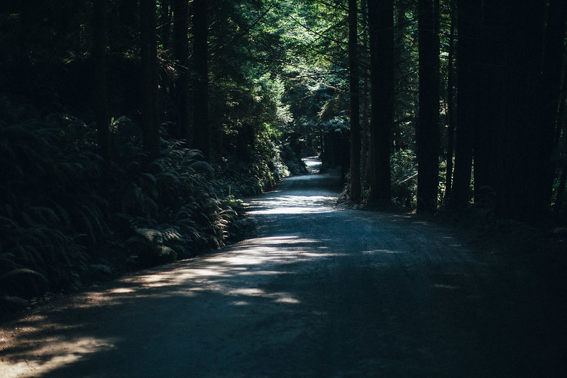 Road to Fern Canyon