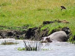 Ngorongoro 11a