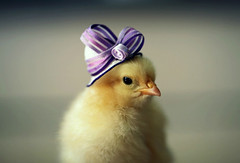 Top-10-Baby-Chicks-in-Hats-5