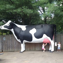 The #cow has a #tail again!  #beardsleyzoo