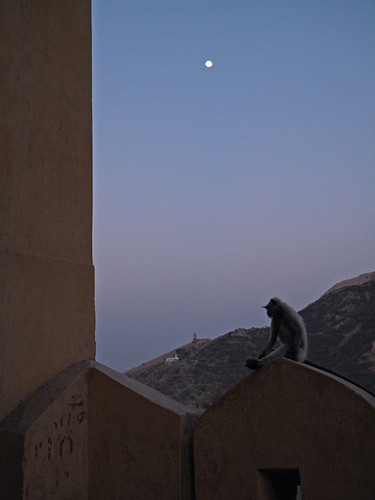 Monkeys watching the moonrise at Amber Fort just outside of Jaipur, India