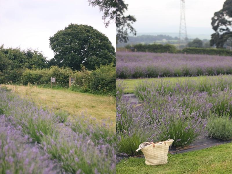 woodland path & bag