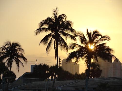 Palms ...