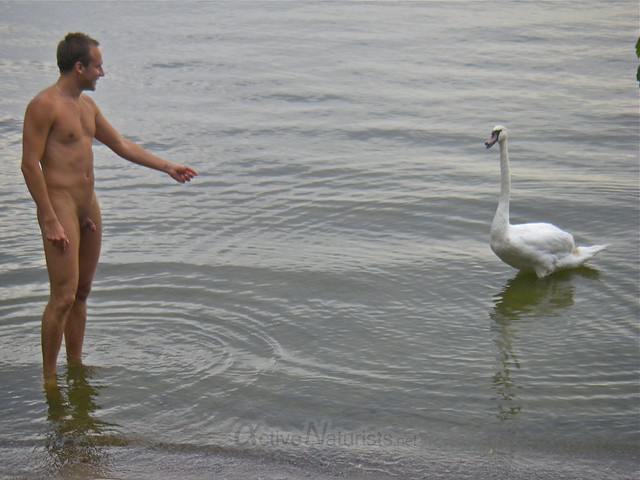 naturist & swan 0001 Wannsee, Berlin, Germany