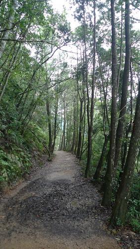 20140809-橫嶺山步道 (13)