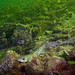 dogfish or catshark