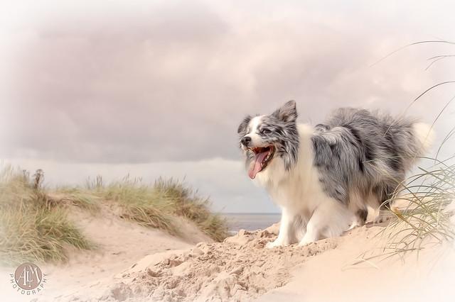 Duke on the Dunes